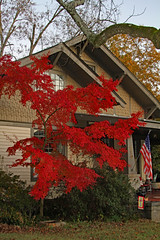 redmaplehse (FAIRFIELDFAMILY) Tags: japanese red maple tree arts crafts craftsman bungalow architecture yard fall grant jason taylor winnsboro sc south carolina porch boy fairfield county southern garden gun house home car vintage chevrolet chevelle