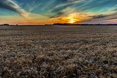 Manitoba Living Sky (Bracus Triticum) Tags: manitoba living sky sunset brandon ブランドン マニトバ州 canada カナダ 8月 八月 葉月 hachigatsu hazuki leafmonth 2019 reiwa summer august