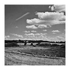 Wspomnienie Lata 2013 (3) (4Rider) Tags: warmia północ north landscape krajobraz pejzaż photoartist drzewo drzewa tree trees las forest poems poetry