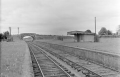 You could graze horses on those platforms! (National Library of Ireland on The Commons) Tags: jamespo'dea o'deaphotographiccollection nationallibraryofireland fairyhouse railwaystation platforms racecourse comeath