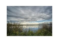 November Light at the Lake (My digital Gallery) Tags: novemberlicht bodensee austria eu lakeofconstance hard november schilf wasser cloudy wolkig vorarlberg ufer