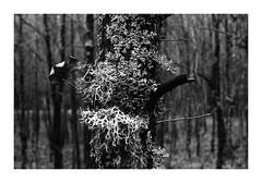 Pożegnanie Lasa 2019 (3) (4Rider) Tags: warmia północ north landscape krajobraz pejzaż photoartist drzewo drzewa tree trees las forest poems poetry
