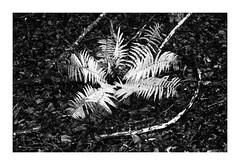 Pożegnanie Lasa 2019 (2) (4Rider) Tags: warmia północ north landscape krajobraz pejzaż photoartist drzewo drzewa tree trees las forest poems poetry