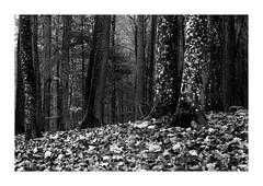 Pożegnanie Lasa 2019 (1) (4Rider) Tags: warmia północ north landscape krajobraz pejzaż photoartist drzewo drzewa tree trees las forest poems poetry