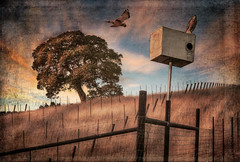 Evening Hunt (larwbuck) Tags: birds landscape artistic autumn california clouds colors composite country fall fence grass painterly rural sunset textures travel tree