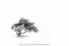 Flickr Forez 204 (Cyril Mattaliano Photography) Tags: white blanc neige hiver winter snow nikon d700 247028g