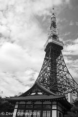 "Tokyo - Roppongi - Tokyo Tower (CATDvd) Tags: nikond7500 estadodeljapón estatdeljapó japan japó japón nihon nihonkoku niponkoku nippon stateofjapan 日本 日本国 catdvd davidcomas httpwwwdavidcomasnet httpwwwflickrcomphotoscatdvd july2019 architecture arquitectura building edifici edificio kantōregion kantōchihō regiódekantō regióndekantō 関東地方 tokio tōkyō tokyometropolis tōkyōto tòquio 東京 東京都 minato minatoku 港区 tokyotower torredetòquio 東京タワー ""flickrtravelaward"""