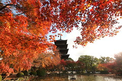 Autumn trees and pagoda (Teruhide Tomori) Tags: 東寺 京都 洛南 日本 もみじ 紅葉 秋 庭園 五重塔 教王護国寺 古寺 afternoon kyoto japan japon toji pagoda garden autumn momiji kayedemaple architecture construction temple tree red sky