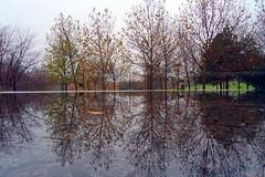 Reflexii de noiembrie (Dumby) Tags: landscape bucurești românia reflections autumn fall water outdoor nature colors sector3 ior titan