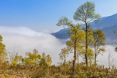 _J5K5892.0213.Hầu Thào.Sapa.Lào Cai (hoanglongphoto) Tags: asia asian vietnam northvietnam northernvietnam northwestvietnam landscape scenery vietnamlandscape vietnamscenery sapalandscape nature natureinsapa sky clouds flanksmountain mountain mountainouslandscapeinvietnam mountainousofsapa forest theforest canoneos1dx canonef70200mmf28lisiiusm tâybắc làocai sapa hầuthào phongcảnh phongcảnhsapa thiênnhiên thiênnhiênsapa mây cloudsofsapa mâysapa bầutrời rừng sườnnúi trees cây bluessky bầutrờixanh morning morningsunshine buổisáng nắngsớm sunny sunnymorning sunlight