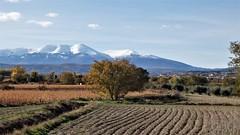 Vega del Queiles, Tarazona, Moncayo. (EduOrtÍn.) Tags: tarazona aragón campo árbol monte vegadelqueiles moncayo vierlas
