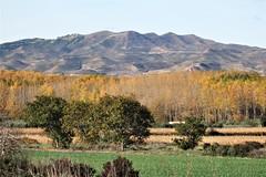 Tarazona - Alto de La Muga. (EduOrtÍn.) Tags: tarazona monte arbol otoño lamuga