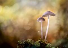 Saveur d'automne /Autumn flavour (mars-chri) Tags: champignons autremonde couleurs automne forêt arbre micélium mousse valdoise fabuleuse