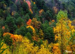 Plan (Gatodidi) Tags: plan ibon huesca aragon naturaleza natura arboles ocres colores otoño landscape paisaje paisatge rio valle ngc national geographic