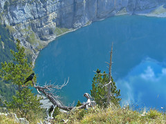 best views Kandersteg 2011 (matthias416) Tags: kandersteg schweiz suisse switzerland mountains berge lake see tree baum crow krähe blue blau yourbestoftoday