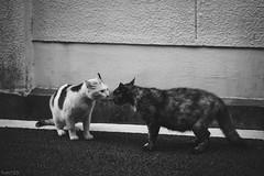 猫 (fumi*23) Tags: ilce7rm3 sony sel85f18 emount 85mm fe85mmf18 a7r3 animal alley blackandwhite bw monochrome cat chat gato neko ねこ 猫 ソニー 路地 モノクロ
