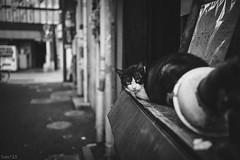 猫 (fumi*23) Tags: ilce7rm3 sony sel35f18f 35mm emount gato cat chat neko katze alley street fe35mmf18 mon monochrome blackandwhite bw bnw ねこ 猫 ソニー 路地 モノクロ