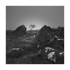 Between a rock and a hard place ! (Nick green2012) Tags: dartmoor tree square silence fog rock granite landscape blackandwhite