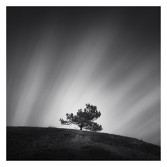 On the hill (Marco Maljaars) Tags: longexposure dutch le blackandwhite marcomaljaars monochrome minimalism sky mood landscape light bw netherlands silence wood tree dune dunes