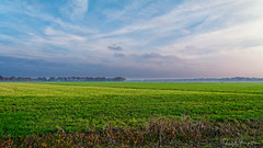 Green November In Drenthe (Alfred Grupstra) Tags: agriculture nature ruralscene farm field land outdoors meadow blue growth season sky landscape grass plant backgrounds scenics crop drenthe autumn otaandehorizon heelfraai
