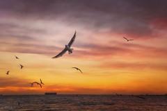 Free bird DSC_3995 (BlueberryAsh) Tags: seagulls birds beach art arttexture st kilda sunset cloudsstormssunsetssunrises boat water ocean flying sea seascape