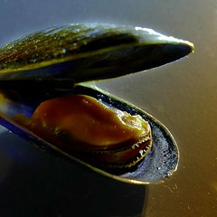 I'm on a diet … (Le.Patou) Tags: challenge closeup mussel seafood shell meal fz1000 removed