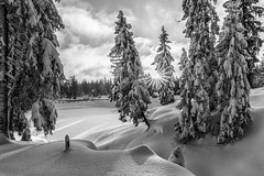 Winterwald in monochrome (Foto-Wandern.com) Tags: canoneos5dmarkiii ef2470mmf28liiusm canon snow winter white black monochrome harz travel hiking outdoor outdoors outside nature fotokurs fotowandern fotoreise phototour sun sunrays clouds landscape blackandwhite trees
