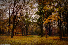 Herbstgemälde (J.Weyerhäuser) Tags: art autumn gemälde herbst photoshop topazstudio colors