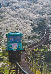 Cherry blossom with slope car track (phuong.sg@gmail.com) Tags: asia beautiful blossom blue cable car cherry closeup curve curvy flower fukushima japan kyoto landscape lawn lonely morning nature outdoors path petals pink plant pretty pure rail railroad railway road route rural sakura scenery season seasonal spring sunny track train transport transportation tree vivid walkway white