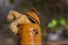 Caught in the Act ! (FocusPocus Photography) Tags: bär bear teddybär teddybear honigtopf thief honeypot dieb barney