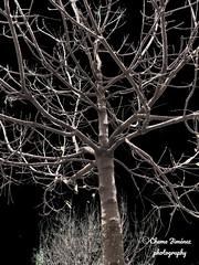 Invierno (Chema Jiménez53) Tags: montajes creación urbano árbol