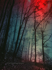 ominuous lights (Dyrk.Wyst) Tags: forest iphone6s dark bird trees landscape mexturesapp silhouettes textures lighteffects artistic conceptual mood