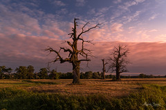 Sunset (Magda Banach) Tags: europe nikond850 rogalin rogalinlandscapepark blue bluesky clouds colors dąb flora green landscape nature oaktree old outdoor outside park plants poland polska sky summer sunset