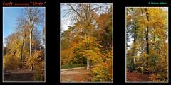 au hasard de la balade dans la hêtraie¹ (philippedaniele) Tags: seine ajouter des tags forêt verte expositiondartoeuvresmonumentales créateurs contemporains