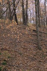 Autumn Woods (Modkuse) Tags: woods forest autumn autumnlandscape autumnleaves autumncolor autumncolors nature natural natureart fall fallcolors fallcolor falllandscape provia fujiprovia xh1provia xh1proviasimulation fujifilmproviasimulation fujifilm fujinon fujinonxf1655mmf28rlmwr xf1655mmf28rlmwr trees treescape art artphotography artistic artisticphotography photoart