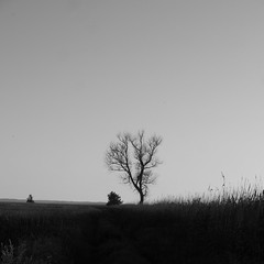 a tree (Darek Drapala) Tags: trees tree nature night natural europe evening sky silhouette sunset skyskape panasonic poland polska panasonicg5 baltic lumix light field space landscape