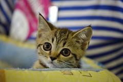 kitten (Сonstantine) Tags: kitten kittens canon catslife cat catsoftheworld catscatscats cute animals photo pic portrait meowmeow meow meowbox