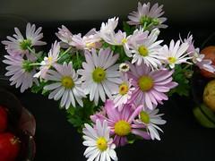 Chrysanthemum (theodosiosc19) Tags: flower nature favorites