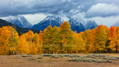 Colors of Autumn (chasingthelight10) Tags: landscapes travel events photography forests foliage meadows mountains rivers snowscenes places oxbowbend wyoming grandtetonnationalpark schwabacherlanding willowflats snakeriver