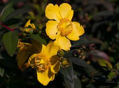 Flowers (ost_jean) Tags: flowers nikon d5300 tamron sp 90mm f28 di vc usd macro 11 f004n ostjean bloemen fleurs natuur nature