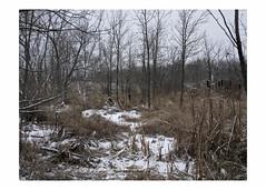 Marsh in snow (Richard C. Johnson: AKA fishwrapcomix) Tags: panasoniclumixg9 20mmf17 color landscape autumn outdoor sedge cattails trees hwy23 theuntendedgarden rivervalley clydeavenue snow saintlouisriver decay grass tangleoflife smithville minnesota duluth icamesofarforbeauty sictransitgloriamundi hires