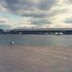 (Boris Kirov Young.Bloods) Tags: seagull centralstation centraal holland netherlands amsterdam 120mm iso400 portra400 mamiyac220 c220 mamiycac220 mamiya
