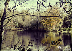 Frank Melville Park... (angelakanner) Tags: canon70d tamron18400 frankmelvillepark setauket longisland water reflection autumn processed
