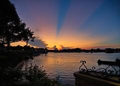Sundown (janedoe.notts) Tags: sunset disney waltdisneyworld epcot water tree trees silhouette unitedstates usa olympus omd em10markii 12100 sky