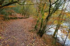 Waggoners Walks Hants (Adam Swaine) Tags: woodland woodlandfloor autumn autumncolours autumnviews beautiful trees lakes leaves hants walks england english britain british adamswaine counties countryside walk ukcounties uk seasons colours paths 2019