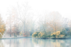 Morning mood in the park (IngridVD. Photography) Tags: herfst park autumn trees mist tree water fog forest ingridvandamme reflection canon mood belgium antwerpen reflectie sfeer canon5dmkiv ingridvd
