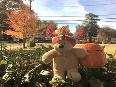 Little Turkey Bear with pumpkin 🐻 (Jeanne1931) Tags: thanksgiving teddybear