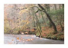 R E S P L E N D E N T - R E S P R Y N (Andrew Hocking Photography) Tags: respryn woods riverfowey river mist autumn november fall cornwall england uk gb outdoor landscape magical spell pastel muted soft colour orange yellow water trees woodland forest nature bodmin