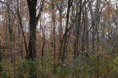 Autumn Forest With Purple (Modkuse) Tags: trees treescape nature natural natureart art artphotography artistic artisticphotography photoart velvia fujifilmvelviasimulation fujifilmxh1velviasimulation xh1 fujifilmxh1 fujifilm fujinon fujinonxf1655mmf28rlmwr xf1655mmf28rlmwr nopostprocessing straightoutofcamera sooc autumn autumnlandscape autumncolor autumncolors fall fallcolors fallcolor falllandscape