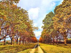 Fall, Leaves, Fall (Jim Roberts Gallery) Tags: autumn fallcolours seasons naturescolours trees leaves jimrobertsgallery jimroberts